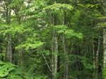 気仙地方森林組合